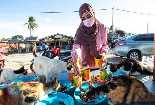 Dedikasi dua jam sehari berbakti pada 100 kucing jalanan